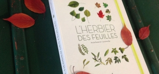 herbier-feuille-2015-laurence-bar 01