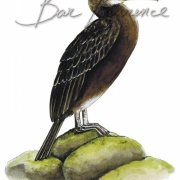 Laurence-Bar-2017-GUIDE NATURE OISEAUX-BORDS-MER-08