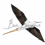 Laurence-Bar-2017-GUIDE NATURE OISEAUX-BORDS-MER-15