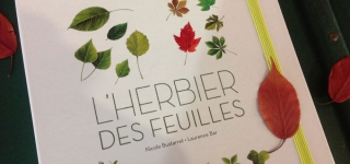 herbier-feuille-2015-laurence-bar 02