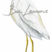 Laurence-Bar-2013-GUIDE NATURE OISEAUX-BORDS-MER-17