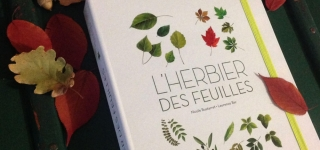 herbier-feuille-2015-laurence-bar 05