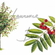 laurence-bar-2017-herbier-feuille 07